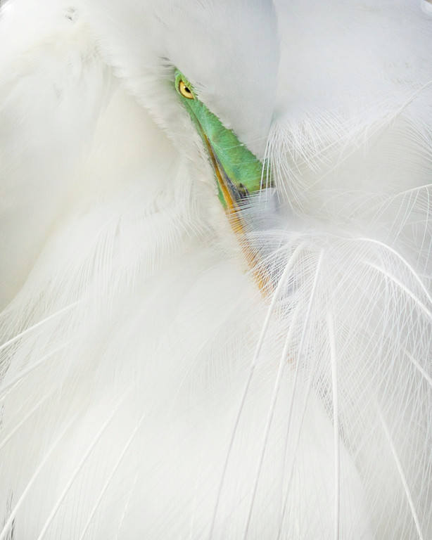 A Touch of Emerald<br /> First Place (Tie)<br /> Diana Calleja