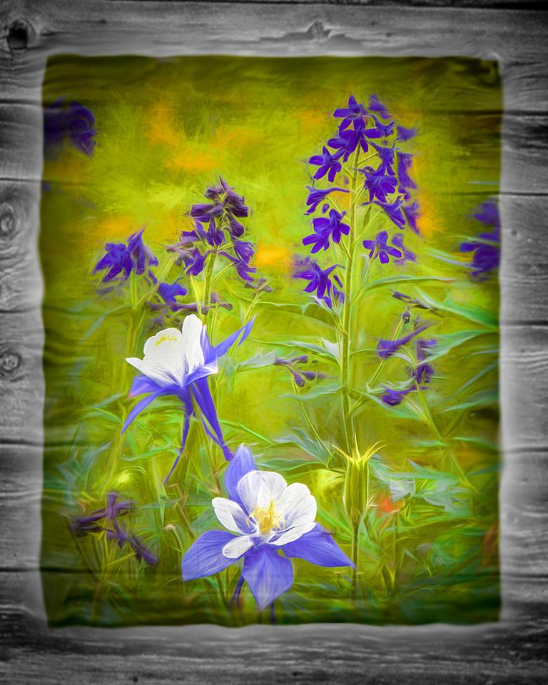 Wild Flower<br /> First Place (Tie)<br /> Dave Garrison