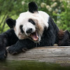 Second Place (Tie)<br /> The Happy Panda<br /> Kathy Snead