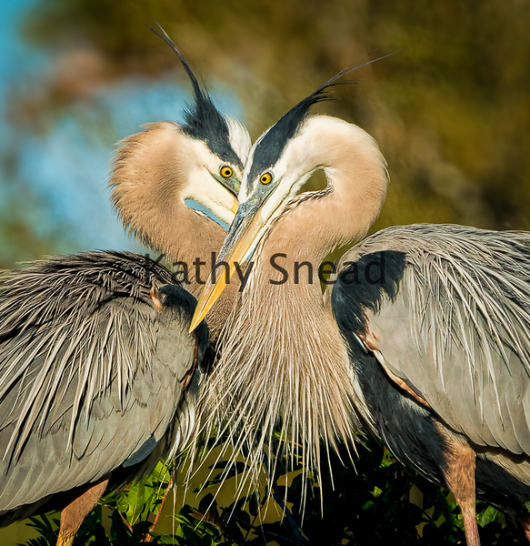 Nature Projection Image of the Year<br /> Happy Valentine's Day<br /> Kathy Snead