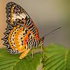First Place (Tie)<br /> Butterfly on Leaf<br /> Nancy Springer