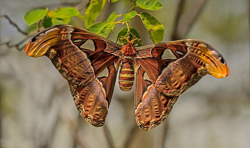 Second Place (Tie)<br /> Chicago Moth<br /> Nancy Springer
