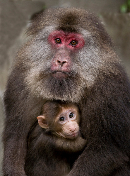 April<br /> Honorable Mention<br /> Nature Photography Division<br /> Mother and Baby<br /> Liz Keery