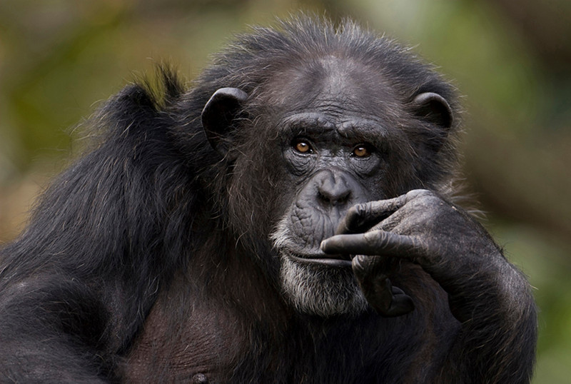 May<br /> Honorable Mention<br /> Electronic Imaging Division<br /> The Thinker<br /> Liz Keery