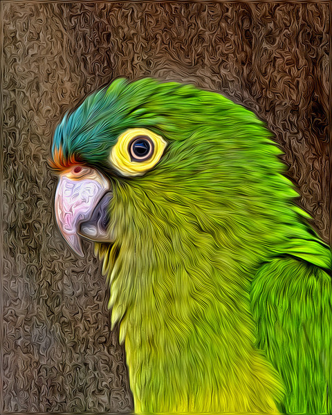 June<br /> Blue Award<br /> ICCC Creative Division<br /> Orange Fronted Parakeet<br /> Mike Landwehr