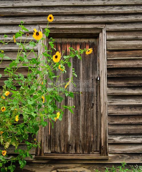 Doorway from the Past _DSC7412