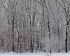 Snowy Day _DSC4876