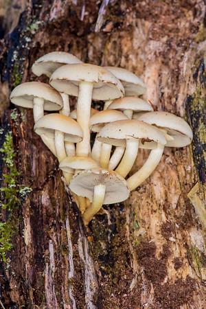11 - Not Mushroom inside