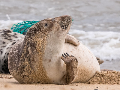 Scratching Seal
