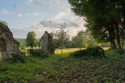 Ankerwycke Yew Ruins