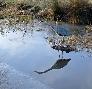 Heron Reflects