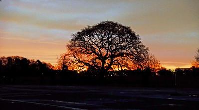 Bushy park sunrise