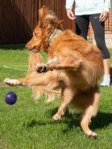 Dog Twist