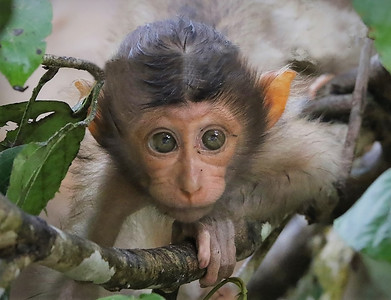 Borneo Innocence