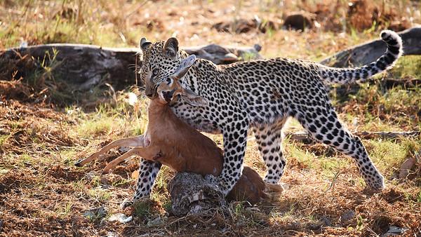 leopard Dinner