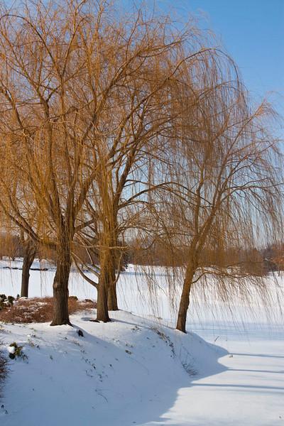 Miriam Kravis - Willows in the Winter
