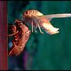 Ken Black - Cicada #2