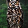 Owl<br /> John Kowalyk