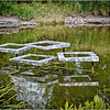 Sculptures in a Pond<br /> Wes Kiel