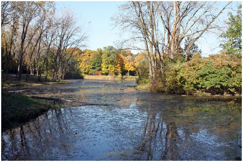 Pond Reflections<br /> Jean Ungar