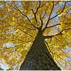 Up a Tree<br /> Jean Ungar