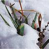 Surviving the Winter<br /> Irene Szilagyi