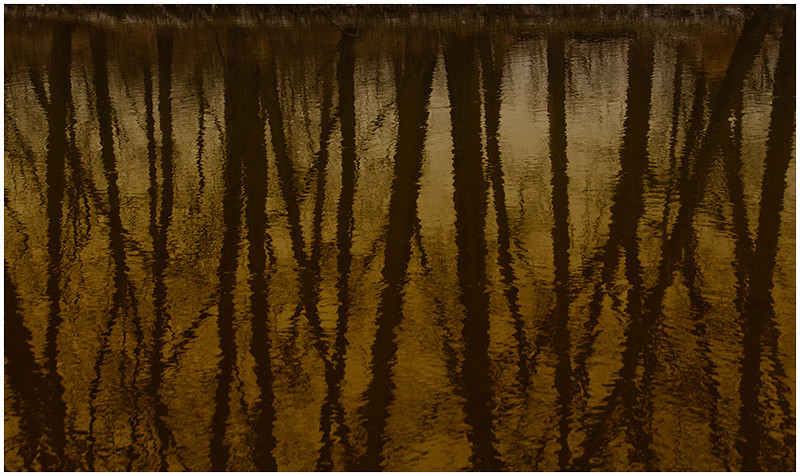 Reflections<br /> Diane Hamernik