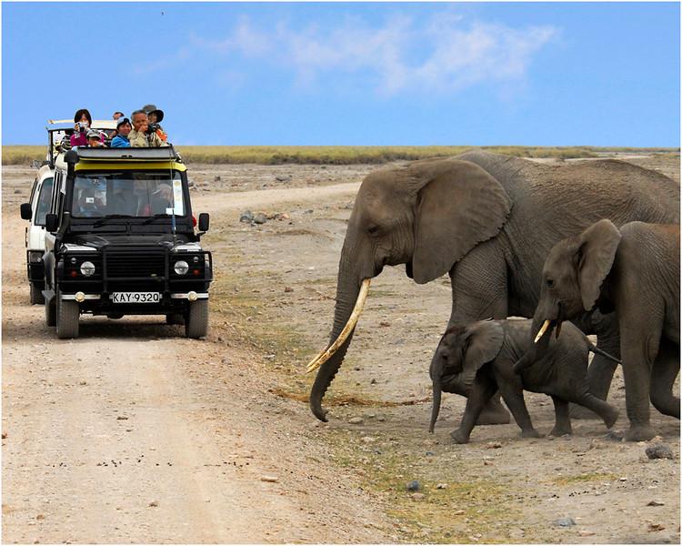 Masai Mara - Kenya<br /> Joe Tarlos