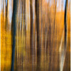 Autumn Woods Abstract<br /> Theresa Hart