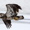 Fishing on the Wing<br /> Tom Mulick