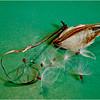 Seed Pod<br /> Irene Szilagyi