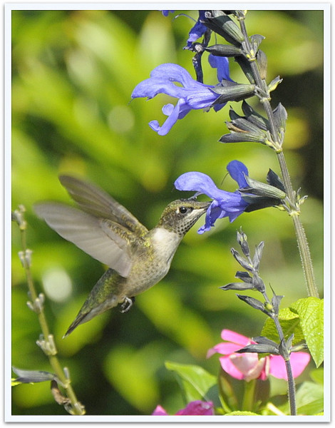 Feeding in Flight<br /> Bob Wallace