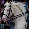 Horsepower<br /> Sue Lindell