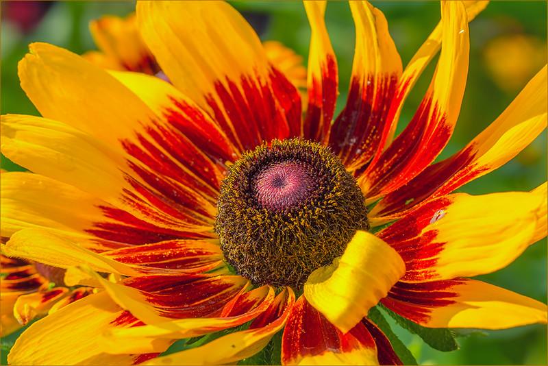 Yellow and Red - Diane Hamernik
