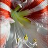 Full Blossom - John Kowalyk