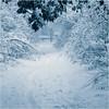 Snowy Path - Dave Waycie