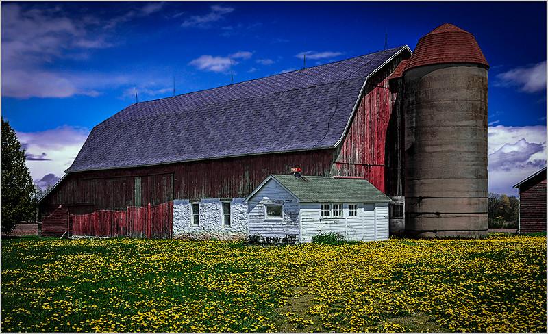 Dandelion Farm - Joe Rakoczy