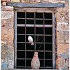 Bill Bishoff - Pigeon in Warehouse Window