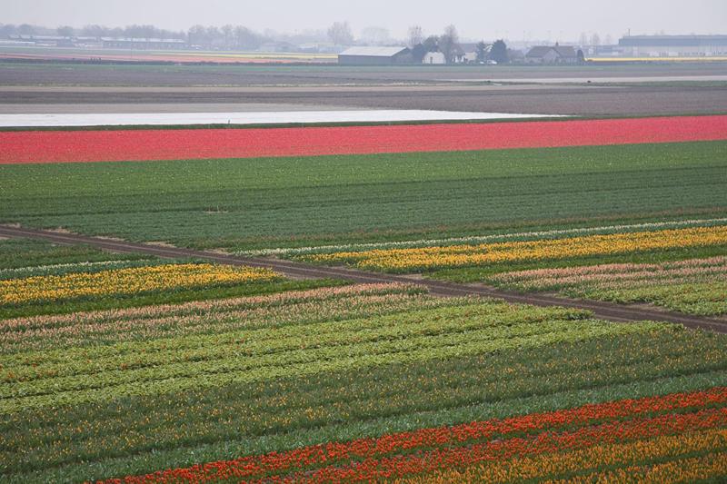 Miriam Kravis - Field of Flowers