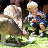 Boy and 'roos - Ken Kendzy