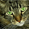 I Am Watching You - Irene Szilagyi
