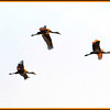 Three Cranes - Ken Black