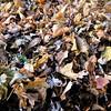 Leaves - Aki Stepinska