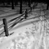 Into the Woods - Dave Waycie