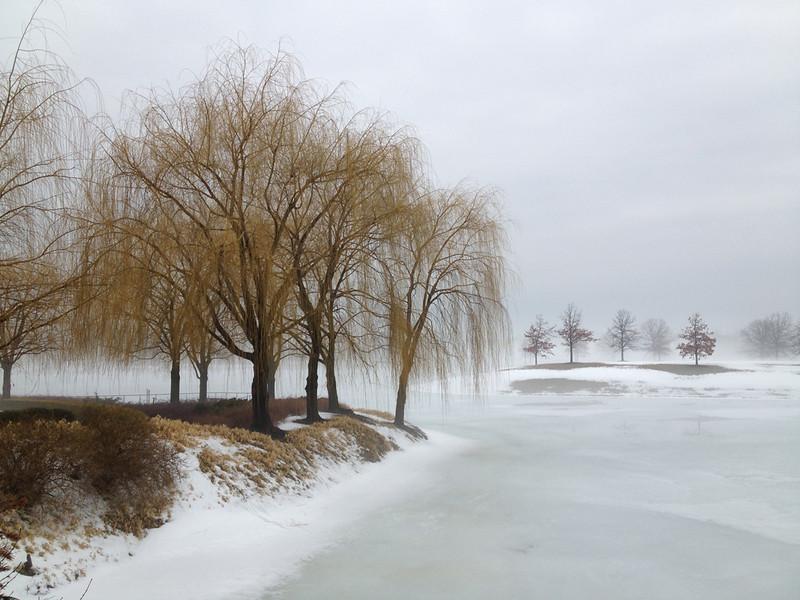 Winter Willows<br /> Bob Cims