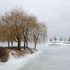 Winter Willows<br /> Bob Cims
