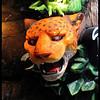 Tiger<br /> Ken Black
