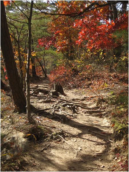 Trail in Fall<br /> Linda Waycie