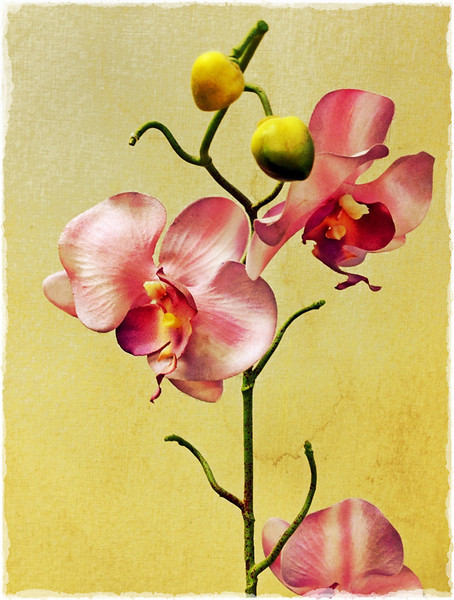 Orchids at the Dentist<br /> Jerry Hug