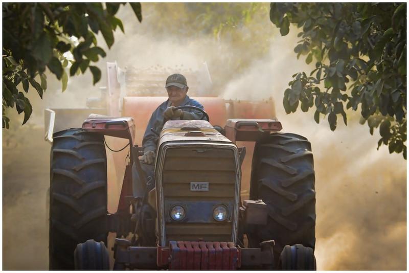 Working the Walnut Grove<br /> Greg Pickle
